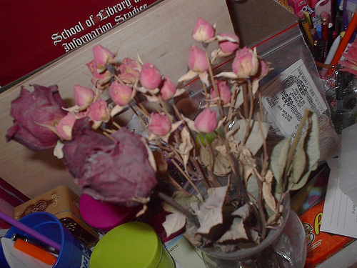 Revive dried flowers project
