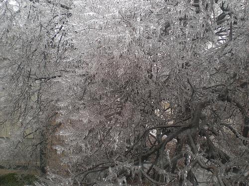 Tree outside my bedroom window