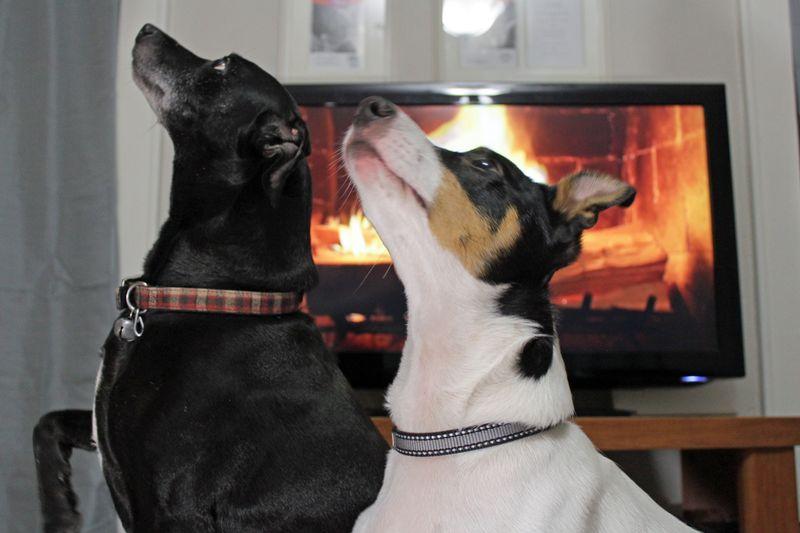 2012_christmas_dogs